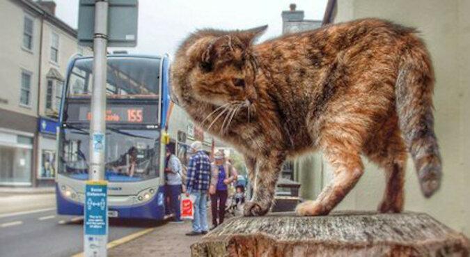 Ledwo udało się znaleźć: kotka jechała na trzech autobusach, aby dostać się do morza