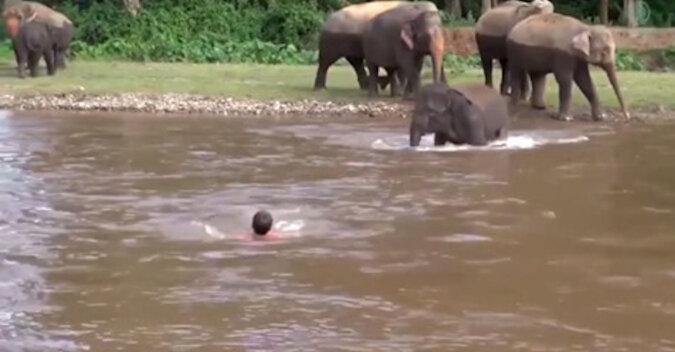 Słoniątko uratowało mężczyznę, który wpadł do rzeki: wideo podbiło cały Internet