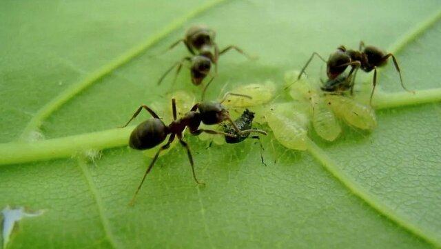 Sprawdziłam 3 sposoby na mrówki i tylko jeden okazał się skuteczny. Dzielę się wynikami