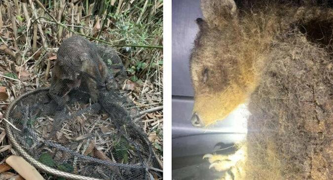 W lesie znaleziono ciekawe zwierzę o dziwnym i zaniedbanym wyglądzie