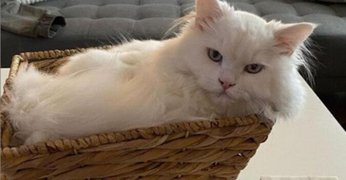 Kot stał się gwiazdą Internetu po tym, jak właściciele zapomnieli w domu deskorolkę