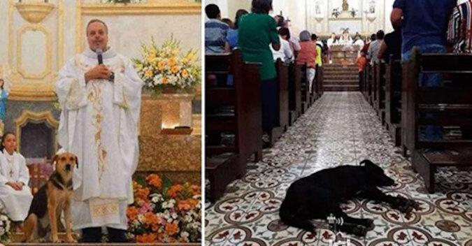 Ksiądz z Brazylii daje schronienie bezdomnym zwierzętom w kościele i szuka dla nich domu