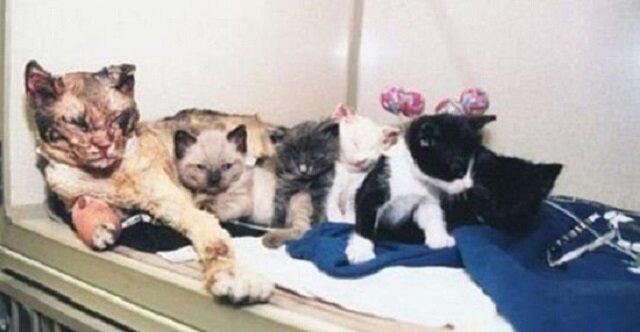 Bohaterska kotka wpada do płonącego pomieszczenia, by uratować swoje kocięta