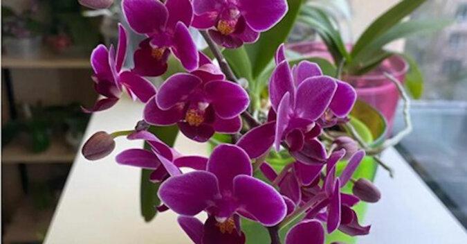 """Poprosiłam pracownice kwiaciarni o """"przepis"""" na karmienie kwiatów. Po skorzystaniu z tej sztuczki orchidee kwitną"""