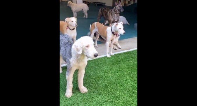 Psy patrzą na psa bawiącego się w basenie i nic nie rozumieją. Zabawne wideo