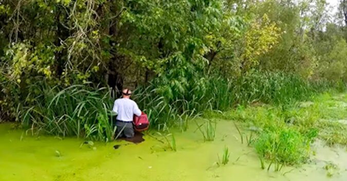 Usłyszał miauczenie na bagnach i wskoczył prosto do wody, gdzie czaiły się aligatory