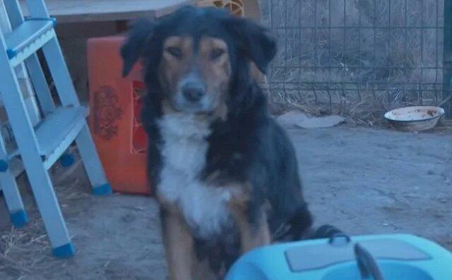 Biedny pies błagał ludzi o jedzenie na stacji benzynowej, aby nakarmić szczenięta. Ona sama często głodowała. Uratowano całą rodzinę