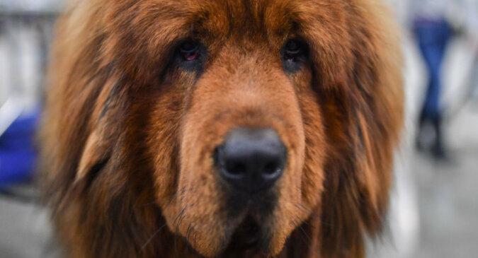 Pies, który nie lubi weterynarzy, uciekł z jednym z lekarzy będącym na jego plecach. Śmieszne wideo