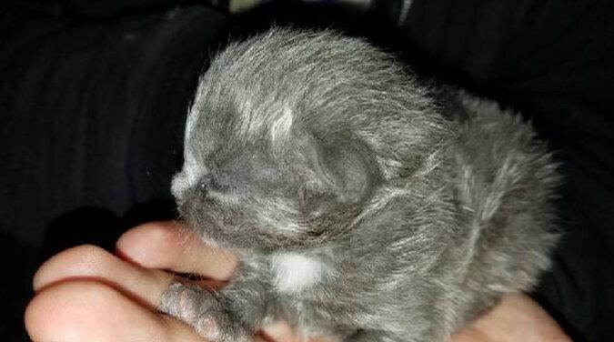 Mężczyzna znalazł w swojej łódce małego kotka i został jego bliskim przyjacielem