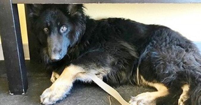 Dowiedziawszy się o diagnozie psa, właściciele porzucili zwierzaka bezpośrednio w szpitalu