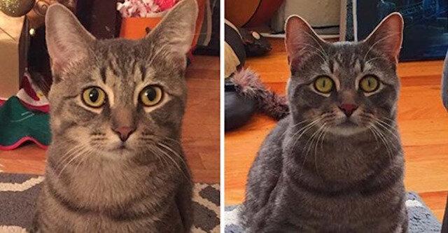 Para adoptowała bezpańskiego kota i odkryła, że jest on bardzo wyjątkowy