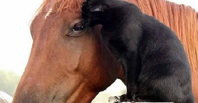 Bezpański kot znalazł dom, rodzinę i najlepszego przyjaciela