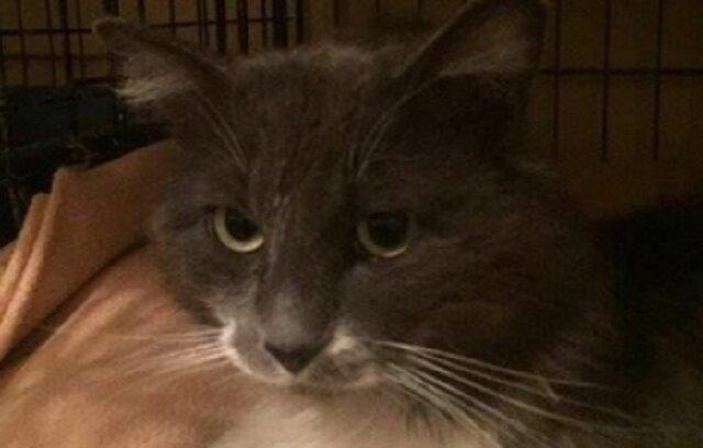 """Kot siedział na ulicy i marzł, a obok leżała kartka: """"Nie ruszaj kota!"""""""
