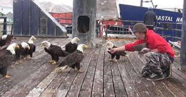 Kiedy ten człowiek karmi fascynujące ptaki krewetkami... Warto zobaczyć to niezwykłe nagranie