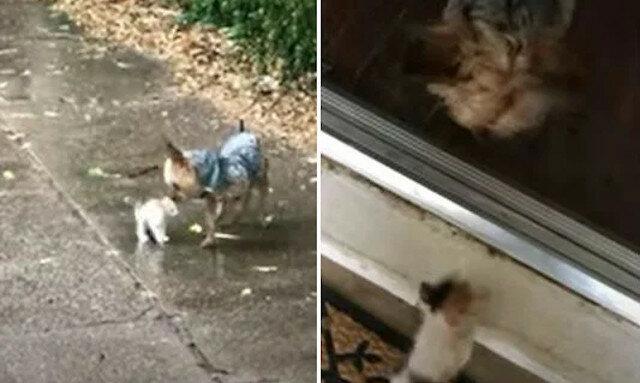 Pies ratuje maleńkiego kotka płaczącego w deszczu