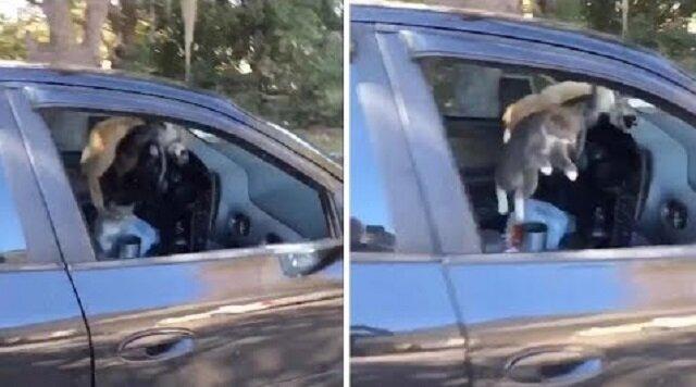 Kocia impreza: co się stanie, jeśli zapomnisz zamknąć okno w samochodzie. Wideo