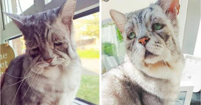 Wygląda jak najsmutniejszy kot, ale wygląd jest mylący