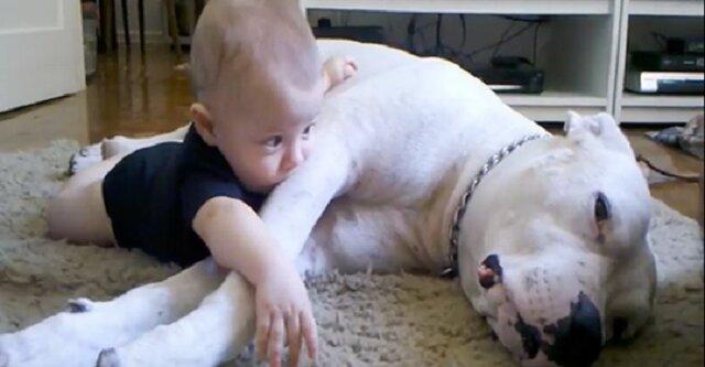 Chłopczyk położył się obok psa. Widząc, co się dzieje, mama szybko chwyciła za kamerę