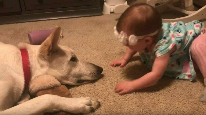 Dziecko zasypuje psa buziakami – nikt nie przewidział jego reakcji