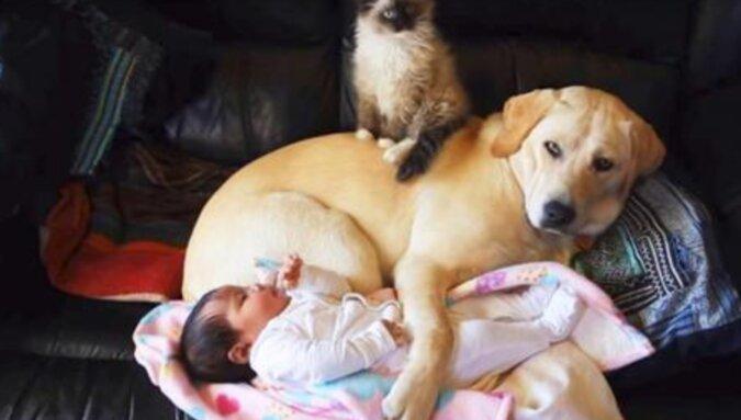Wchodząc do pokoju dziecka, mama była bardzo zaskoczona, gdy zobaczyła tam kota i psa