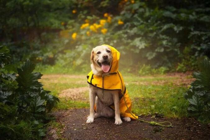 Tak się dzieje, gdy nawet deszcz nie może wypędzić leniwego psa z werandy