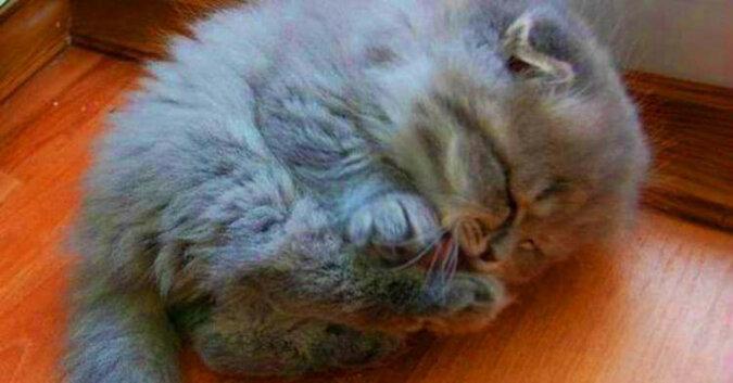 Historia niezwykłego kociaka uratowanego przez starszą panią