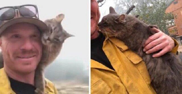 Ten kot jest niezwykle wdzięczny strażakowi. Zobacz, dlaczego i spróbuj się nie wzruszyć