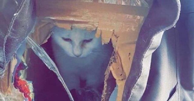 W rozdartym kartonowym pudełku mieszkał kot. Ale wraz z nadejściem zimy czekały go zmiana
