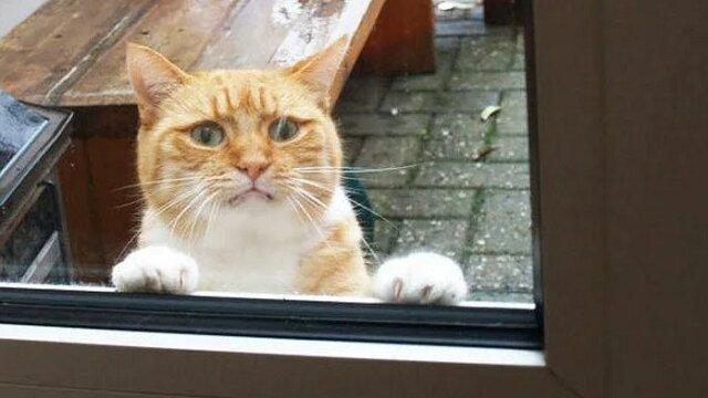 """""""Człowieku! Wpuść mnie! Nie, nie dopiero co wyszedłem"""". Zabawne koty"""