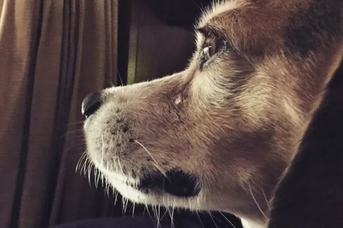 Zaginiony pies przez 8 lat szukał swojego domu. Widząc właściciela zaczął płakać