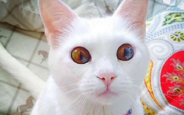 Top 10 najpiękniejszych kotów na planecie Ziema
