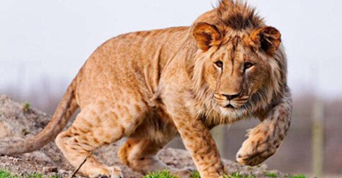 5 hybryd zwierząt, o istnieniu których mało kto wie