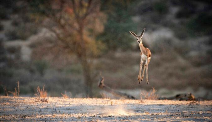 Zwycięzcy konkursu na najzabawniesze zdjęcie natury