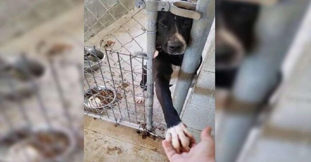 Pies ze schroniska wyciąga łapę, by trzymać rękę każdego przechodnia. Zobacz nagranie