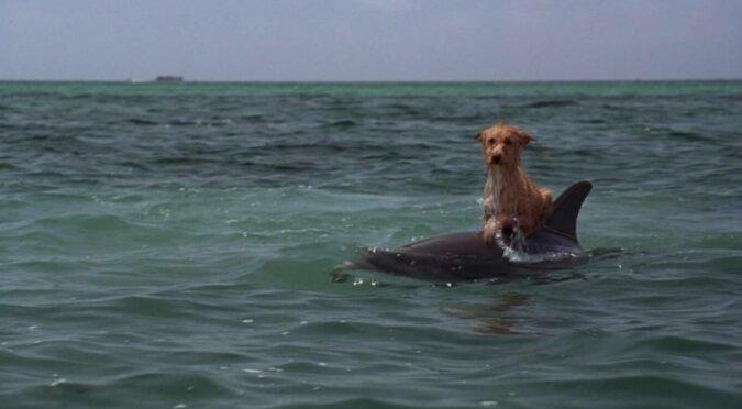 Delfiny pomagają ludziom i zwierzętom