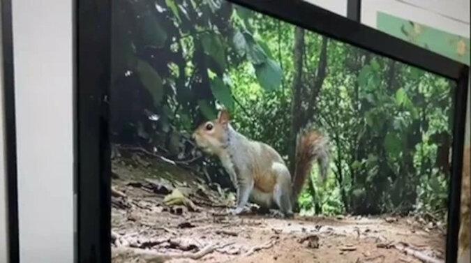 Pies zobaczył wiewiórkę w telewizji, a jego zaskoczony wygląd rozśmieszył wszystkich. Wideo