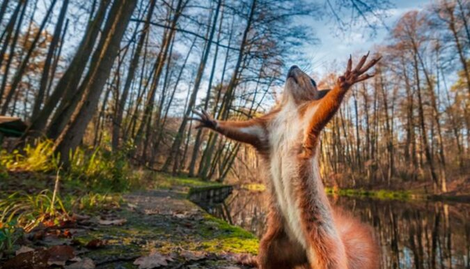 Wiewiórka została złapana podczas kradzieży pieniędzy. Ukradła banknot o największym nominale
