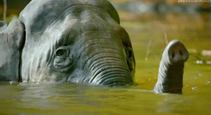Największy robot szpiegowski kąpie się ze słoniami: wideo