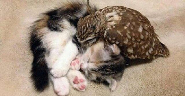 Kociak i sowa są najlepszymi przyjaciółmi