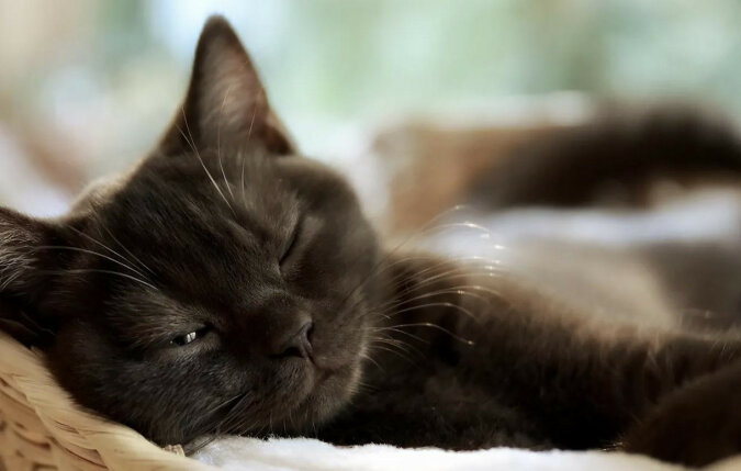 Dlaczego koty tak dużo śpią?
