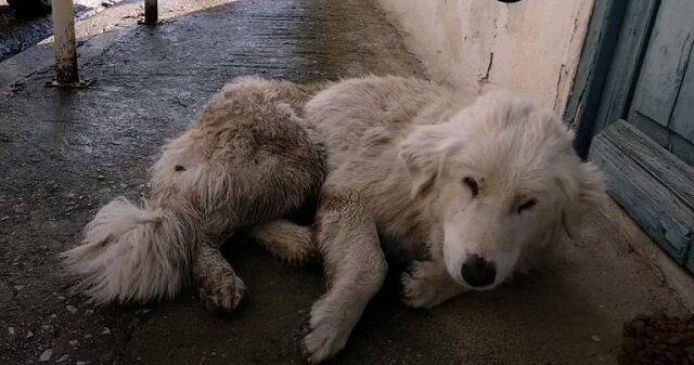 Ranny pies upadł na drogę i zamknął oczy. Nie mógł już chodzić