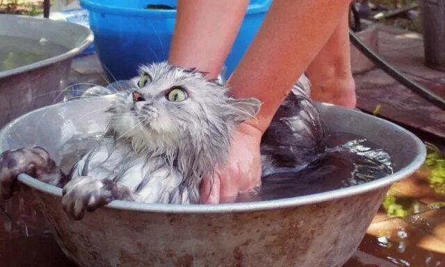 Gorące lato i zwierzęta domowe. Śmieszne zdjęcia