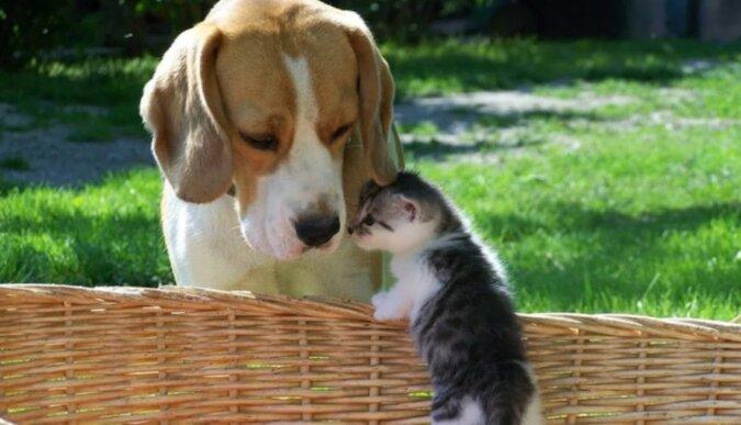 Pies Loni przynosił jedzenie ciężarnej kotce, a potem został tatą dla jej dzieci