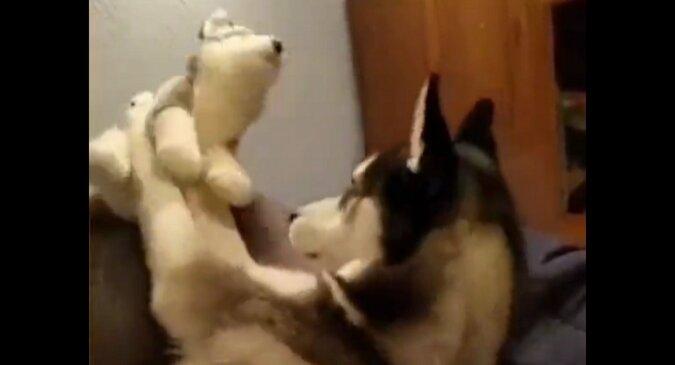 Pies jest obrażony na zabawkę, ponieważ ona nie oddaje mu pocałunku. Wideo