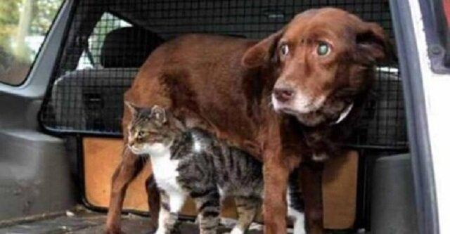 Kot przewodnik dla niewidomego psa