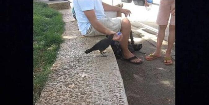 Ptak był spragniony i poprosił o pomoc ludzi