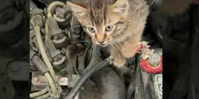 Olej wymaga wymiany: kot obejrzał silnik samochodu i rozbawił Internet. Wideo