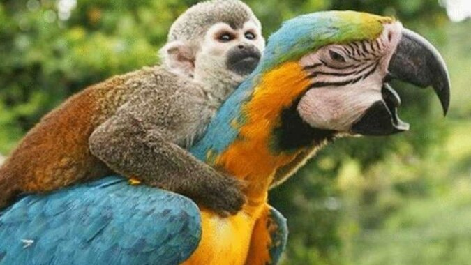 Zdjęcia wyjątkowej przyjaźni różnych zwierząt