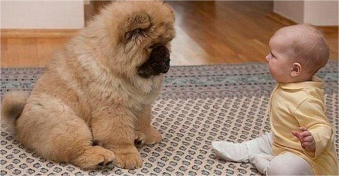 Neurolog przepisał choremu dziecku psa chow-chow