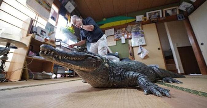 Krokodyl mieszka w japońskiej rodzinie od 40 lat